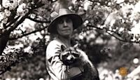 All the presidents' pets: Calvin Coolidge's White House raccoon
