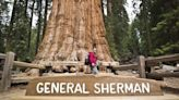 Firefighters 'working really hard' to keep flames away from California's famous General Sherman sequoia