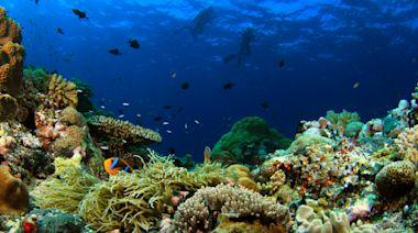 帛琉「旅遊泡泡」要來了!帛琉在哪裡、旅遊費用檢疫規定絕美景點整理包