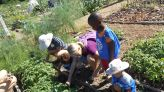 Schools find ways to keep gardening lessons blooming