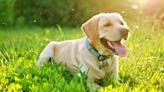 Seis maneras de proteger a tus mascotas de los insectos