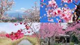 進擊の櫻花祭!全台賞櫻12祕境不私藏,加碼美拍夜櫻、枝垂櫻隧道8景點