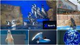 【桃園景點】全台最新水族館「Xpark」實景參觀、票價場次、地圖交通、週邊美食一次收錄