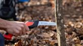 Fall landscape care to keep plants and pollinators healthy