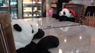Restaurant uses cuddly panda bears on seats to enforce social distancing rules