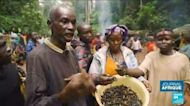 Centrafrique : la prolifique saison des chenilles