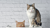 For Owners In Need, Choose the Best Cat Litters on the Market