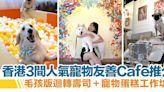 寵物友善Cafe 香港3間推介| 美國復古風+毛孩版迴轉壽司+寵物蛋糕工作坊蛋糕 | HolidaySmart 假期日常