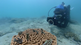 本地研 3D 打印泥造珊瑚礁盤 珊瑚存活率增 4 倍