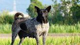 中部石虎保育衝突區 動保團體啟動浪犬絕育計畫