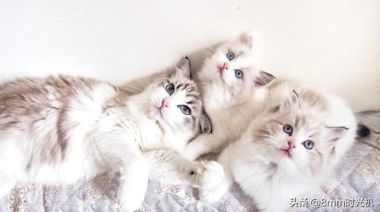 家庭飼養寵物貓要注意些什麼?