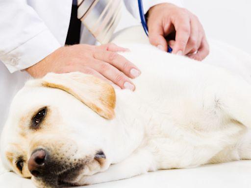 寵物知識+/狗狗不會喊疼!留意13個牠們疼痛的行為徵兆