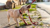 Need a Deal on Pet Insurance for Your Furry Friend? Here Are 8 Affordable Options