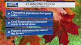 Leaf Watch: Best times and places in Georgia and Alabama to see fall foliage