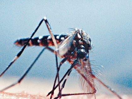 上月白紋伊蚊指數跌至5.7%