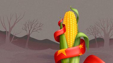 大量糧食靠進口 中國耕地卻拋荒?