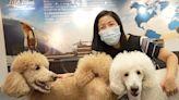 【珍言真語】寵物移民顧問:港人為寵物包私人飛機