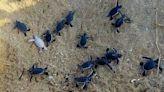 《成為小小生態觀察家》:常聽說海龜半夜時會上岸產卵,所以海龜是夜行性動物嗎? - The News Lens 關鍵評論網