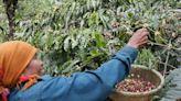 胡志明市防疫封鎖令市場憂慮全球咖啡豆供應受影響