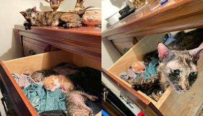 貓媽半夜叼3寶寶偷開櫃「藏進育嬰房」 養父嘆:要重新洗內褲了