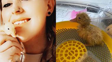 英國女子買盒裝蛋測試 30天後竟如願「孵出小鴨」!