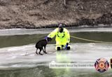 North Dakota First Responders Rescue Labrador Retriever Stranded on River Ice