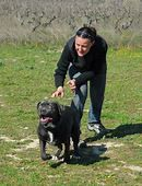 Understanding the Cane Corso Temperament (Trainable, Stable ...