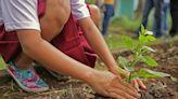 Come realizzare un kit di giardinaggio per bambini: i migliori