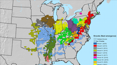 Cicadas lurking underground for 17 years will emerge on the East Coast. Here's where
