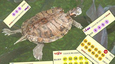 4/30 大樂透、雙贏彩、今彩539 頭獎均摃龜