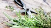 An Alarming Amount of This Popular Herb Is Tampered With, New Study Finds   Eat This Not That