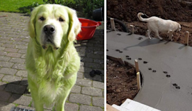 50 dogs who tried so hard to be good boys and girls but dramatically failed