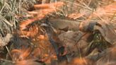 Online burn permits free thanks to new law