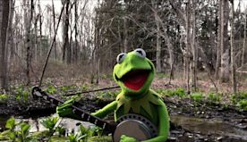 Rainbow Connection, a 2020 performance by Kermit the Frog | The Kid Should See This