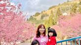 2021 拉拉山恩愛農場賞櫻最新花況,衝上山來一趟粉紅佳人之旅吧!