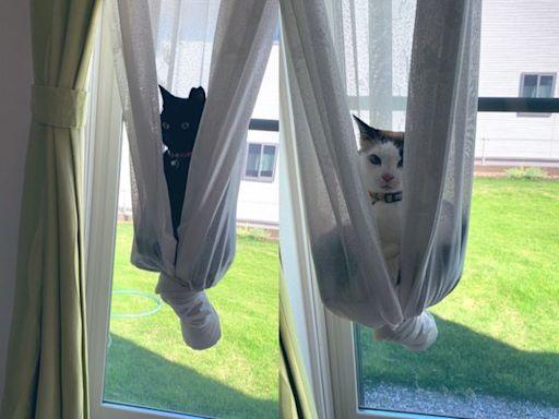 黑喵主子開大絕做空中瑜珈 奴才嚇壞驚喊:窗簾要壞啦
