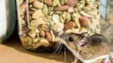 This Is the Best Way to Get Rid of Mice, Experts Say