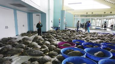 Thousands of turtles, rescued during last week's winter storm, return to sea