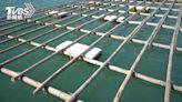海洋「白色汙染」漂全台!保麗龍浮具塑膠微粒為害怎解 「黑管」可望成解方