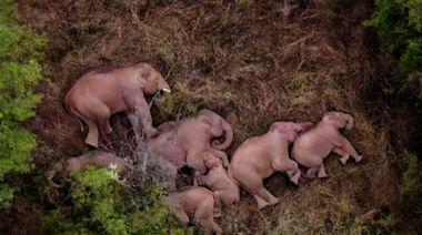 六問亞洲象北移,記者跟隨大象探尋答案