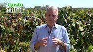Scienza & Salute: la storia epica dell'uva, tra salute e gusto