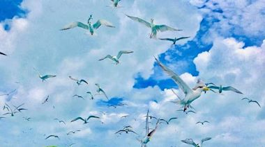 疫情再現自然奇景 澎湖小白沙嶼出現萬鳥齊飛壯觀景象