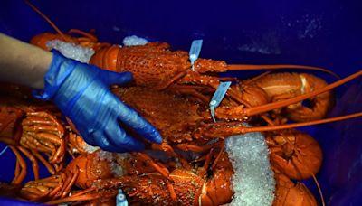 港府官員稱歐洲龍蝦涉「國家安全」問題 打臉中共