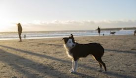Dog-friendly San Diego: Where to Eat, Stay, and Play With Your Pet