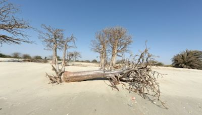 Climate change threatens more than 100 mn people in Africa: UN