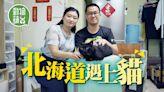 寵物移民|日本北海道救流浪愛滋貓 女友棄求婚戒指花四萬救貓回港 | 蘋果日報