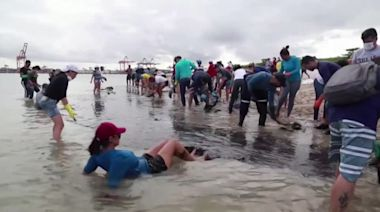 Civilians and soldiers remove thick oil from Brazil's beaches