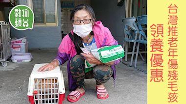 動物領養|台灣推老年殘障毛孩領養優惠 2個月助17寶貝找到溫暖新家 | 蘋果日報