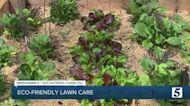 Consumer Reports: Eco-friendly lawn care
