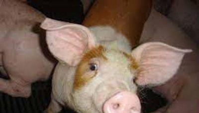 《四大公投系列之2》萊豬不要來? 總統:助國家經貿布局